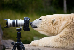 If I were a polar bear.. This would be me!