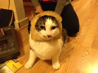 Bread cat is confused.