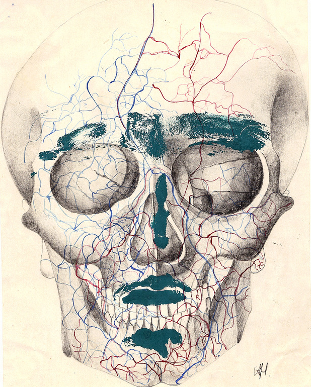 Alexandra Holownia. Skull 2, 1982. Pencil on paper.