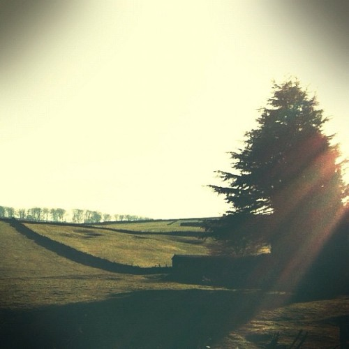 Sun/tree/field (Taken with instagram)