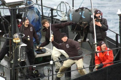 Whale Wars: Sea Shepherd Conservation Society Fights For Marine Life
