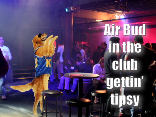 follow-haha-funny-lol:  Air bud in the club gettin' tipsy! More