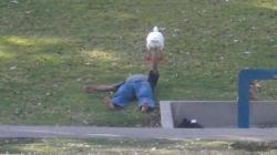 lisabunnies:  You see the weirdest things at parks in LA. This guy was bench-pressing this goose for ten minutes.