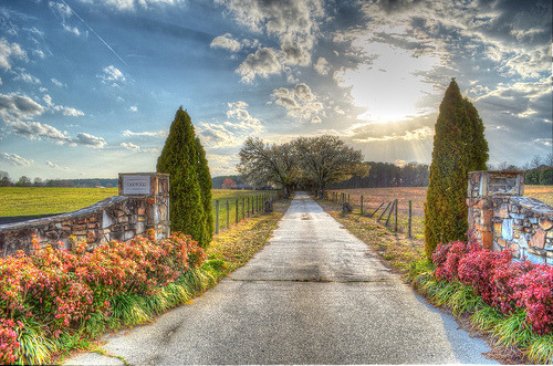 Driveway lined with trees 2 (by ugadawg1864)