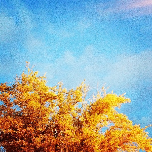 #orange #blue #sky #tree #contrast #color #photography (Taken with instagram)