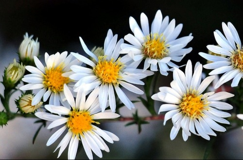 daisies are my favorite <3