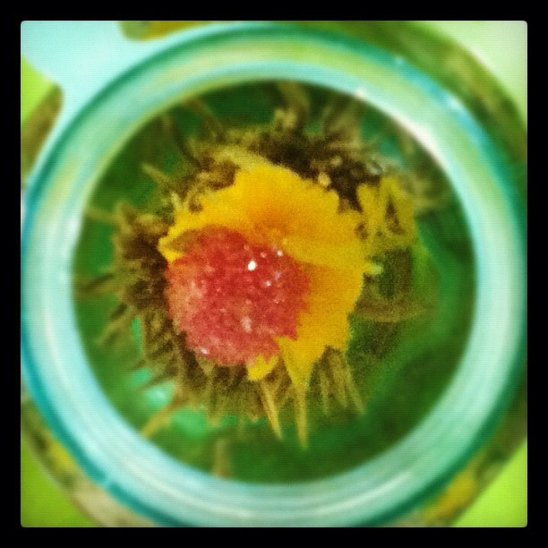 Jasmine tea :) (Taken with instagram)