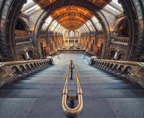 enchantedengland:  enchantedengland: Natural History Museum, Exhibition Road, in South Kensington, London. This is one of three major museums on this same road (the other two are the Science Museum and the Victoria and Albert Museum) and they are all FREE!!