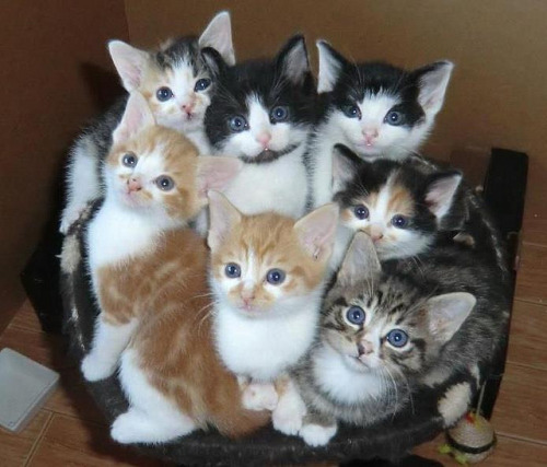 kittens by dolphinboy18 on Flickr.