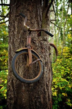 andrewbreitel:   saltykisses:  A boy left his bike chained to a tree when he went away to war in 1914. He never returned, leaving the tree no choice but to grow around the bike. Photographer Unknown   this is absolutely beautiful ive reblogged this before and ill do it again..