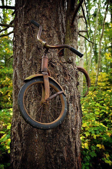 bohofien:   A boy left his bike chained to a tree when he went away to war in 1914. He never returned, leaving the tree no choice but to grow around the bike. Photographer Unknown