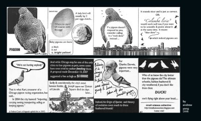 vegansaurus:  A pigeon zine! Made by the lovely Small Science Collective. Meave and I are totally all about this! Goddamn I love pigeons.  They have a little discussion about pigeons on the site. Pigeons and Darwin. I actually read that passage about pigeons by Darwin that they are talking about. It's hella boring. Sorry. I love Darwin though! Though I'm not sure I believe in the idea of species. Some people have suggested that we'd learn a lot more if we organize a map illustrating the dispersal of different traits in a type of animal rather than segregating them into different species. The traits would likely correspond with different environmental conditions and we'd see why or how the traits evolved. As the definition of species gets murkier and murkier, we might want to look for alternative systems of organization. That's enough book-learning for today! Posted with permission from the Small Science Collective!