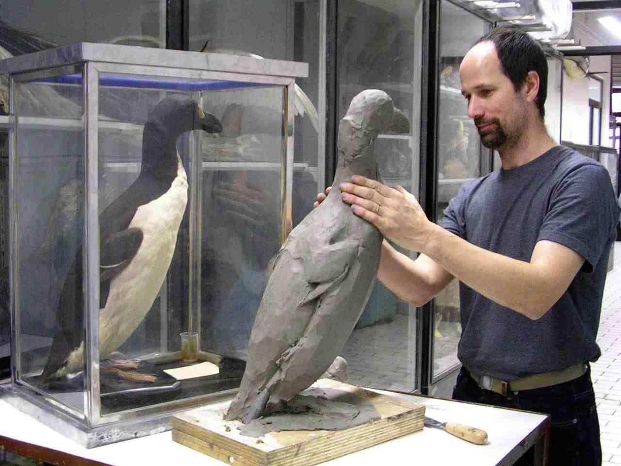 The Lost Bird Project Sculptor Todd McGrain with a Museum specimen of the Great Auk, which serves as a model.