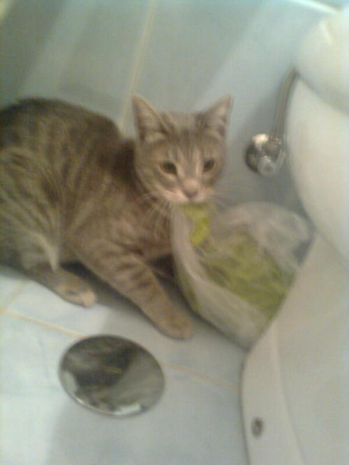 zombiejig:  My mom was making dinner when suddenly the cat steals the lettuce and runs away with it to the bathroom. okay.