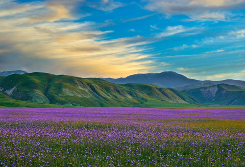 oqo:  The colours of spring - Wind Wolves Preserve, California | image by Mark Geistweite