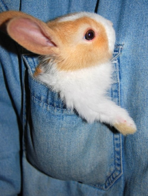 Pocket bunny :)
