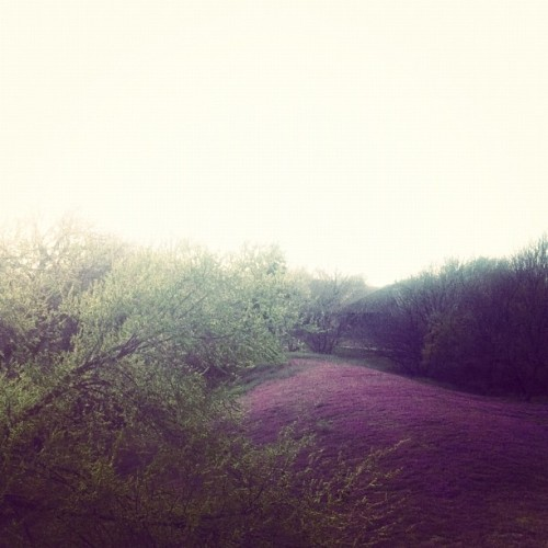My [yard] is pink. (Taken with instagram)