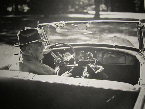 FDR and Fala, out for a ride, from the FDR Presidential Library (via Leanne Michelle, Flickr)