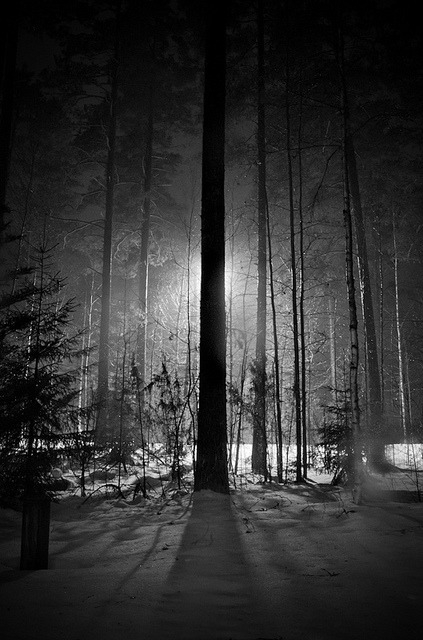 dusan-mandic:  In the Woods by Kimmo J on Flickr.  'Even in darkness your light can shine' - Aura Borealis