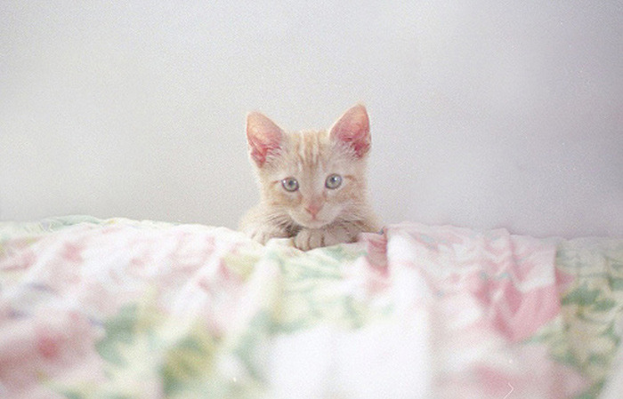 """Oh hai! Did you say treat??"" Photo via two two oh four"