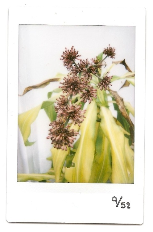9th instax! Strange group of flowers!