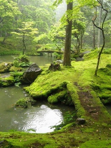 hortoncaulfield:  pigstaughtmetofly:  sunsurfertoo:  Moss covered bridge. Ireland.     This is what everything looks like in Ireland