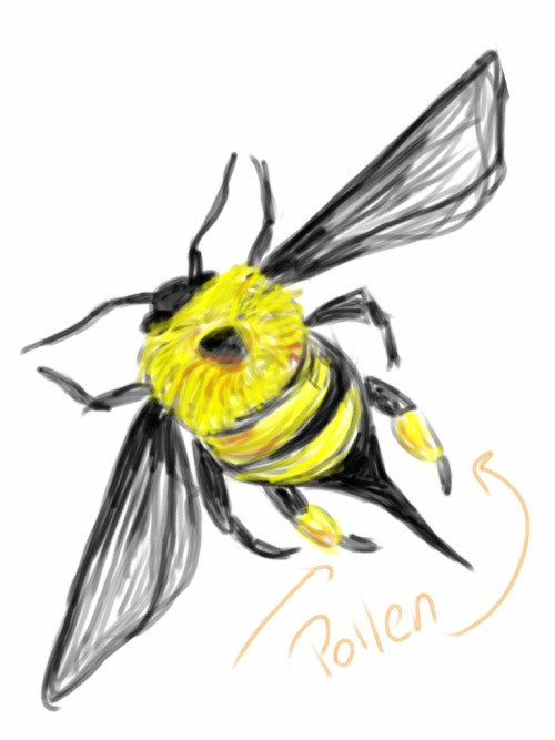 bee sketch I made while Justin gave his talk at the Anaheim Searchers Club..