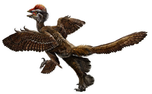 "Feathered dinosaur fossils find has Chinese scientists all aflutter New discovery unearthed in rock formations in north-eastern China confirms birds evolved from dinosaurs, scientists claim The discovery of five remarkable new fossils has confirmed that birdsevolved from dinosaurs, Chinese scientists said last night. Because the fossils, unearthed in north-eastern China, are older than previous discoveries of similar creatures, the find adds weight to the theory that birds descended from predatory dinosaurs. The fossils all have feathers or feather-like structures. The clearest and most striking of the specimens can be seen to have four wings, extensive plumage and profusely feathered feet. One of the scientists who made the discovery, Xu Xing, will reveal details of his find in Bristol at the annual meeting of the Society of Vertebrate Palaeontology. ""These exceptional fossils provide us with evidence that has been missing until now,"" Xu said. ""Now it all fits neatly into place and we have tied up some of the loose ends."" The finds date back to between 151m and 164m years ago, which suggest they are older than archaeopteryx, previously thought to be the oldest undisputed bird. Xu, who is based in Beijing, said: ""The fossils provide confirmation that the bird-dinosaur hypothesis is correct, and supports the idea that birds descended from theropod dinosaurs (the group of predatory dinosaurs that includes allosaurus and velociraptor)."" The fossils were found in Liaoning province. Xu told the Guardian he was shocked when he first saw the best of the specimens. ""This was really unexpected. One thing that would shock you is that this is covered with feathers everywhere except the beak and the claw,"" he said. ""It is the first feathered species known so far; the earliest known feathered species."" There have been fakes before. A creature that came to be known as archaeoraptor, with the body of the bird and the tail of a dinosaur, sent the world of palaeontology into a flutter after apparently being found in China. It was later proved a fake, not unearthed by scientists, but bought at a rock show in the US. China is an increasingly important centre for palaeontology because so much of the country's rocks remain unexplored. A sizeable contingent from China is attending the conference in Bristol, one of the largest gatherings of palaeontologists ever. Xu said: ""The first question we wanted to know was is it fake or real? We checked in detail and convinced ourselves there was no problem. We are 100% sure we are looking at a real species, not a fake one. It's one of the most important for understanding the origin of birds."" Feathers cover the arms and tail, but also the feet, suggesting that a four-winged stage may have existed in the transition to birds. The fossils will also help scientists work out the mechanics of how early birds flew. The specimens have been identified as types of Anchiornis huxleyi. The details of the find will also be announced in Nature."