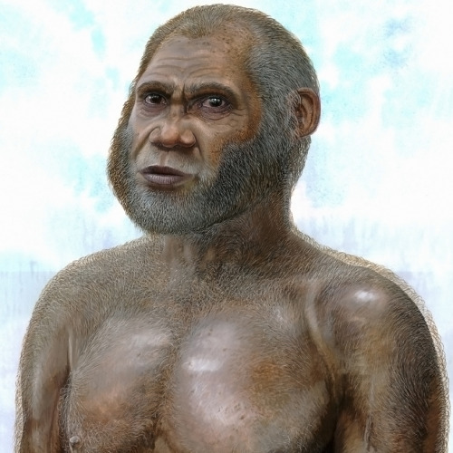 "discoverynews:  New Stone Age People Discovered A newly found Stone Age people featured darker skin, an unusual mix of primitive and modern features and had a strong taste for venison. Fossils of the so-called ""Red Deer Cave People"" were unearthed in southwest China and may represent a new species of human. The fossils from two caves, date to just 14,500 to 11,500 years ago. Until now, no hominid remains younger than 100,000 years old have been found in mainland East Asia resembling any other species than our own. keep reading"