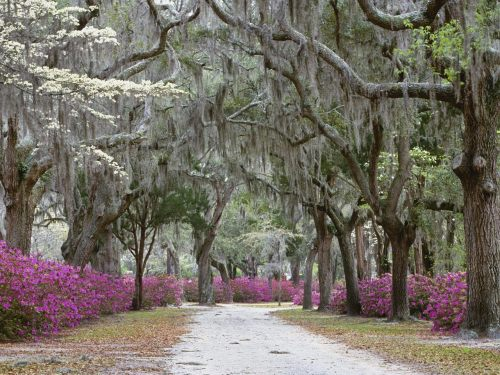 "springtime in savannah.  flights? booked. hotel? booked. eating my face off? to commence in approximately two weeks and a day.  lucky for me there a tons of parks (like the above) to walk around the city.  hopefully i won't have to check in my extra poundage as ""overweight luggage"" on my return flight."