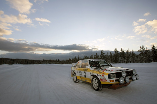 (via 1984 Audi Sport Quattro S1: Quick Spin Photo Gallery - Autoblog)