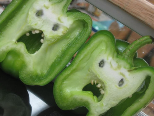 "wtfdigest:  Well, I'm never eating peppers again.Follow ""WTF Digest"" - The most frequently updated WTF Tumblr wire. Enjoy!"
