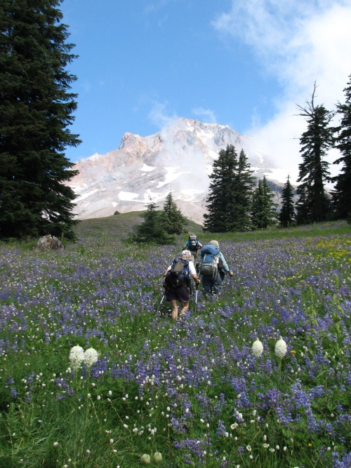 jennlevo:  I can't wait to do the Mt. Hood Wildflower Hike again this year as well, providing the fires don't turn us away.    Summer Adventures: Mt. Hood Wildflower Hike! Gorgeous!