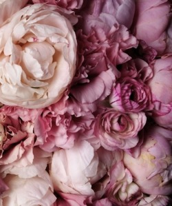 floralblush:  ♡ Click here for similar posts ♡