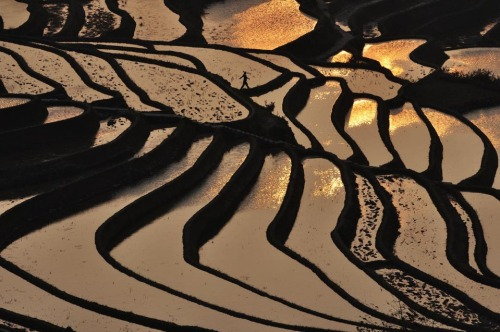 photo credit:  ChinaFotoPress / Zuma Press WSJ: A farmer walked past terraced paddy fields in Yuanyang County, Yunnan province, China, Tuesday. (via WSJ)