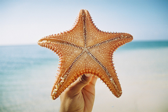 starfish point by cody turner on Flickr.
