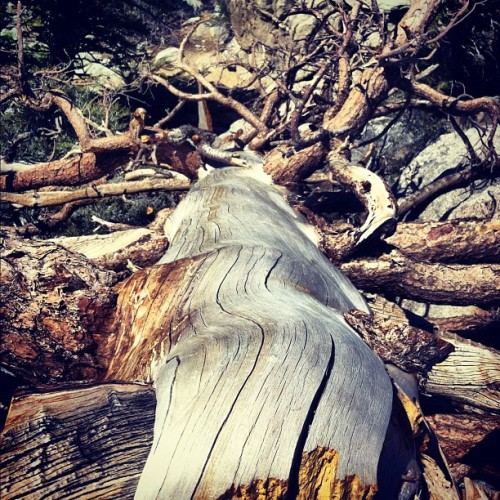 dead #tree  (Taken with instagram)
