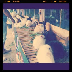 On my way to lembang #rabbit #animal #cute #lembang #bandung #photooftheday #instadaily #instamood #instagallery #photooftheday #bandung #instagram #iphonesia  (Taken with instagram)