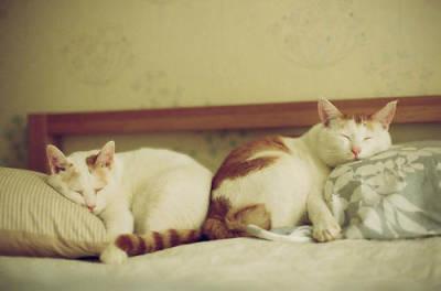I LOVE CATS SO MUCH:p