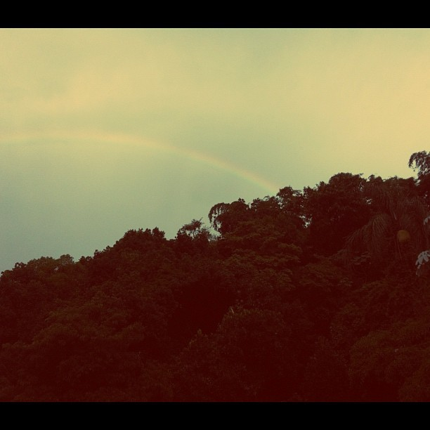 #arco-íris #rainbow #trees #arvores #sky #céu  (Taken with instagram)