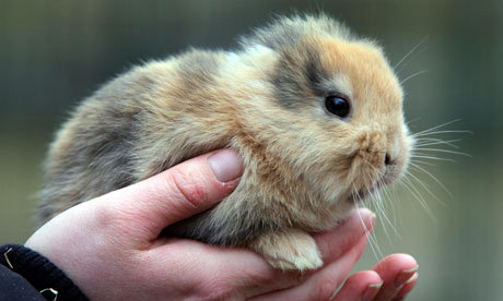 :( guardian:  Unbearably sad. This German bunny was accidentally stepped on and killed by a television cameraman just before a small zoo in Saxony was to have presented it to the world at a press conference. http://gu.com/p/367m2/tw
