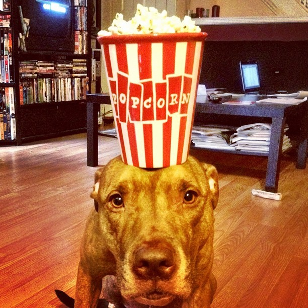 #stuffonscoutshead - #popcorn #foodporn #rednose  (Taken with instagram)
