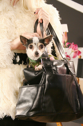 Dogs in purses