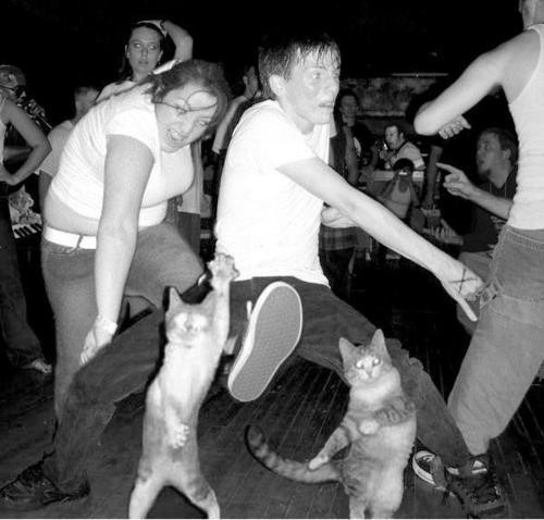 These cats are kicking it! Nice dance moves btw.