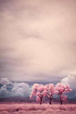 pedalfar:  Three Trees In Infrared by ~Andross01 on deviantART