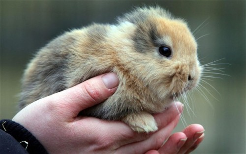 "thedailywhat:  Heartbreaking Tearjerker of the Day: A 17-day-old ear-less bunny named Til, who was expected to become Germany's next celebrity animal a la Knut the polar bear and Paul the Psychic Octopus, died tragically this week when he was accidentally stepped on by a TV cameraman. ""No one could have foreseen this,"" said Uwe Dempewolf, director of the zoo in Limbach-Oberfrohna where Til was set to be unveiled in a special press conference. ""Everyone here is upset. The cameraman was distraught."" Speaking with the German newspaper Bild, the cameraman said Til was hiding under some hay, which is why he didn't see him. Dempewolf offered that at least the bunny didn't suffer, as the cameraman's misstep was ""a direct hit."" Zoo officials are now considering having Til stuffed so that he may be able to enjoy in death the fame he never got to know in life. [telegraph / spiegel.] poor bunny : ("