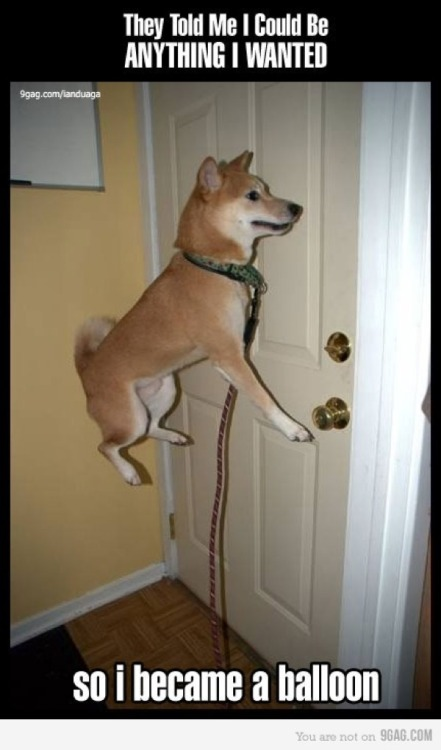 Shiba, Shiba, Lighter Than Air!