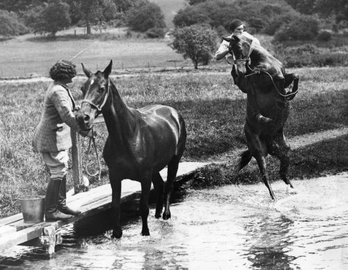 A horse becomes very agitated and jumps out of the water when taken to a pool for a drink with another horse, 14th July 1933.