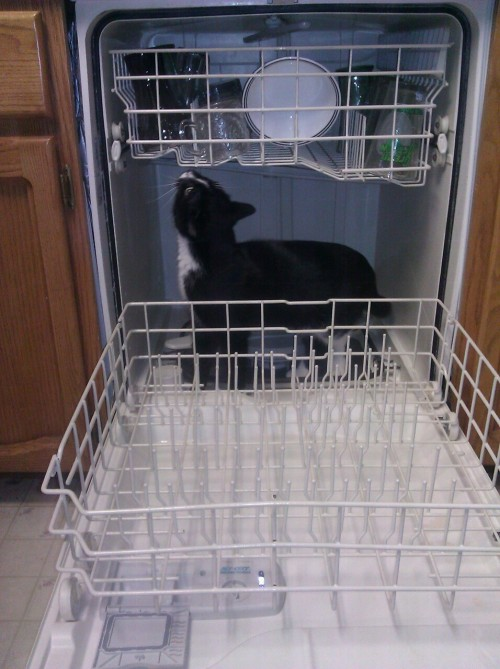 Pirate loves dishwashers!