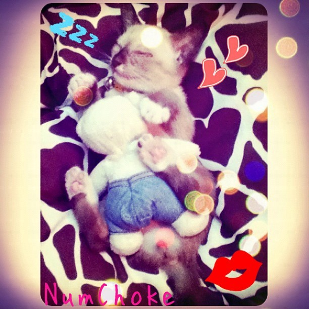 นำโชค #Sleeping #instagram #numchoke #cat - @rummygirl | Webstagram